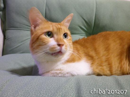 chiba12-07-42.jpg