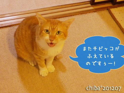 chiba12-07-63.jpg