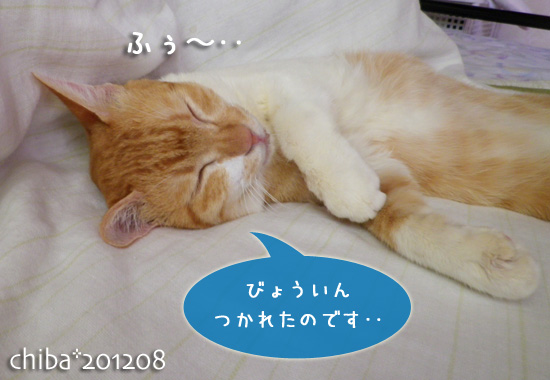 chiba12-08-06.jpg