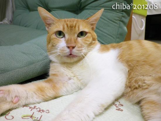 chiba12-08-09.jpg