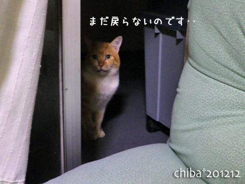 chiba12-12-101.jpg