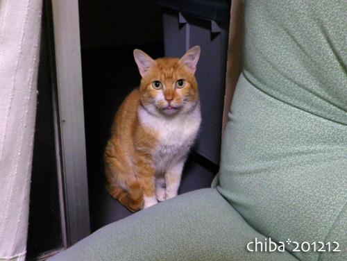 chiba12-12-108.jpg