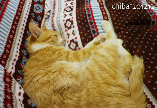 chiba12-12-164.jpg