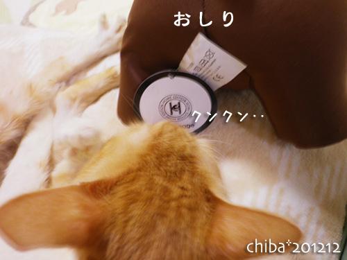 chiba12-12-28.jpg