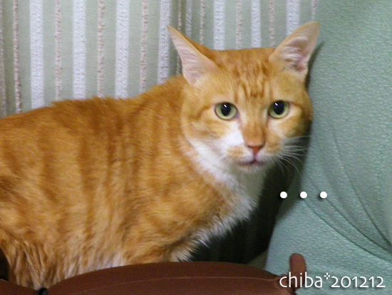 chiba12-12-95.jpg