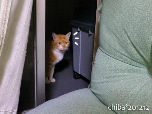 chiba12-12-99.jpg