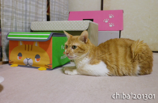 chiba13-01-04.jpg