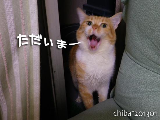 chiba13-01-15.jpg