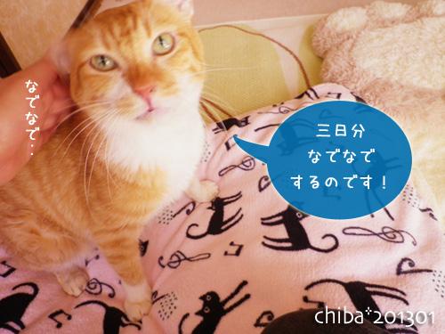 chiba13-01-36.jpg