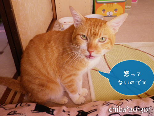 chiba13-01-38.jpg