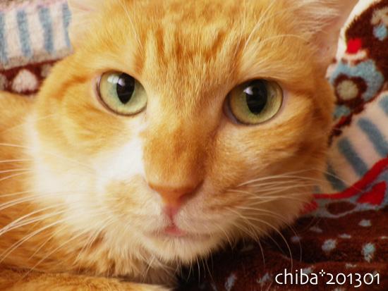 chiba13-01-56.jpg