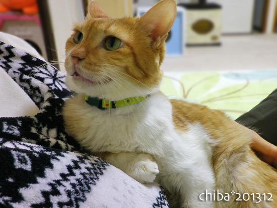 chiba13-12-07.jpg