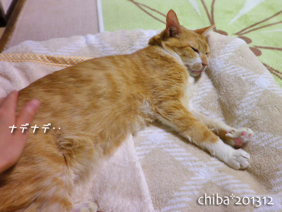 chiba13-12-151.jpg