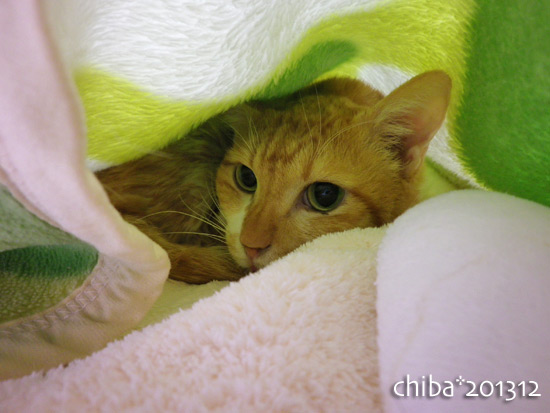 chiba13-12-22.jpg