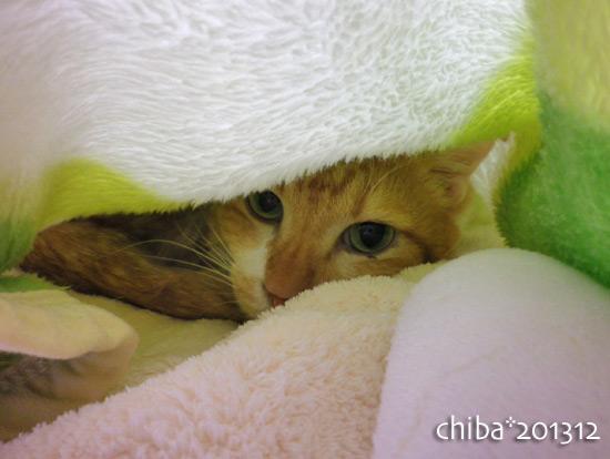 chiba13-12-26.jpg