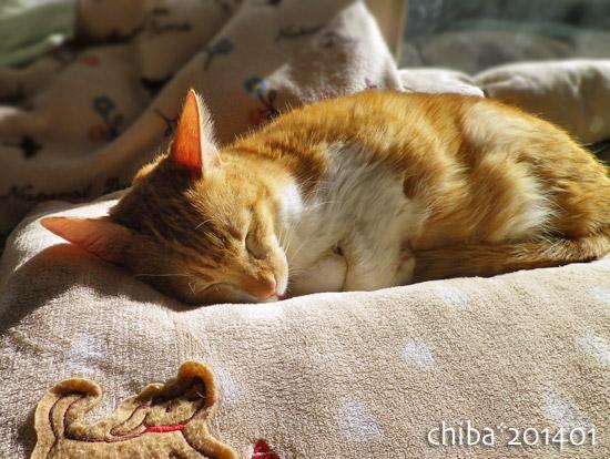 chiba14-01-16.jpg