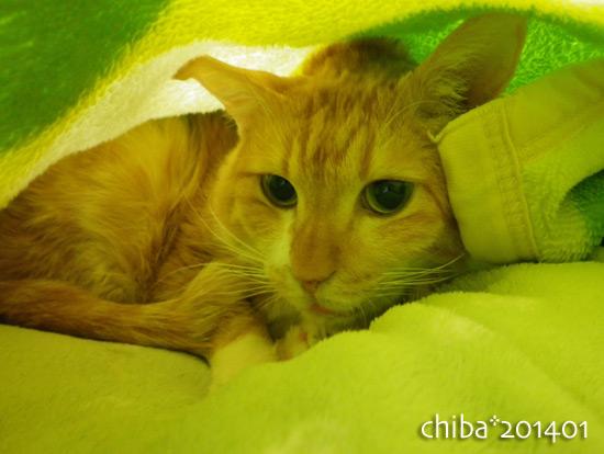 chiba14-01-62.jpg