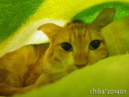 chiba14-01-63.jpg