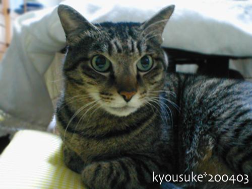 kyousuke12-12-1.jpg