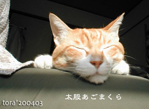 tora12-12-01.jpg