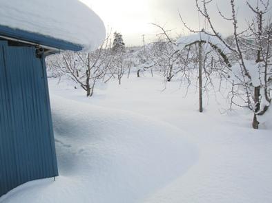 真っ白い雪が こんなに!