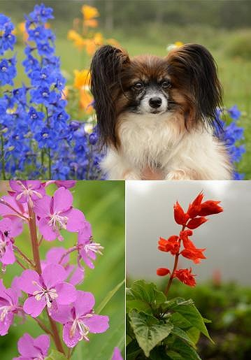 お花とぷり