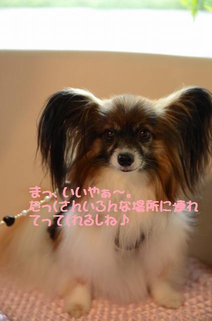 DSC_0032_20120813091239.jpg