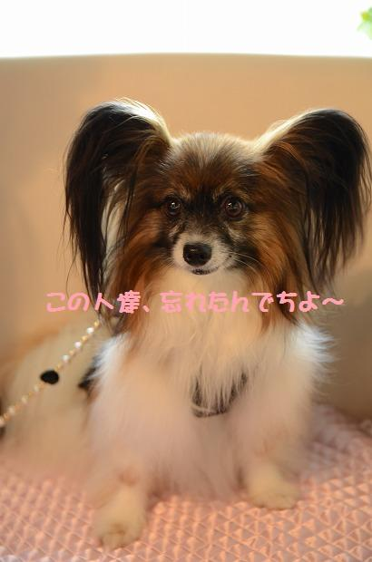 DSC_0040_20120813091238.jpg