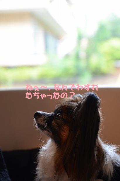 DSC_0055_20120813091238.jpg