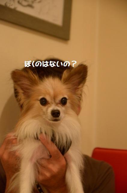 DSC_0210_20121017210830.jpg