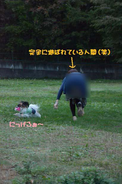 DSC_0383_20121029202447.jpg