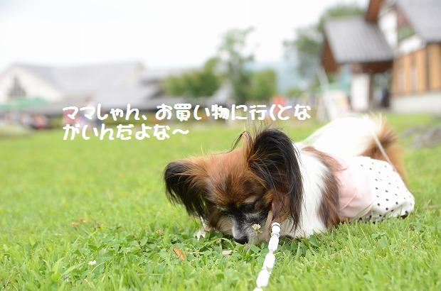 DSC_0405_20120822212628.jpg
