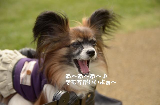 DSC_0447_20121014215554.jpg