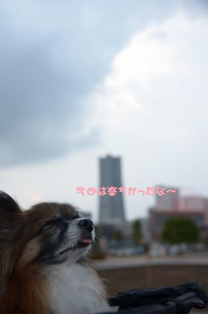 DSC_0458_20120926204745.jpg