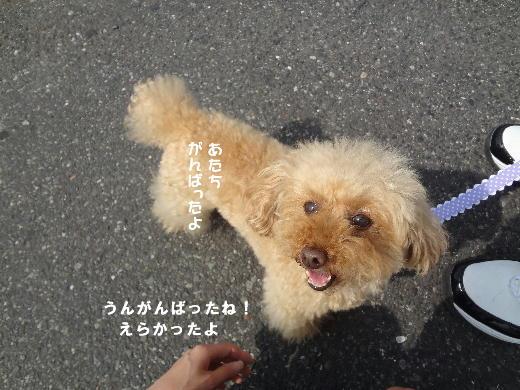 a_20120526213201.jpg