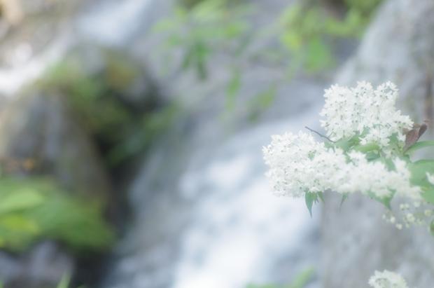 白いお花、何でしょう?いっぱい咲いてましたん♪