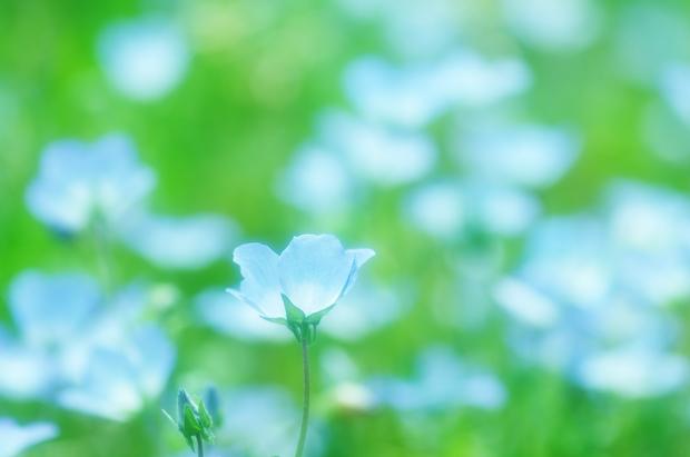 お花が撮りたーい♪
