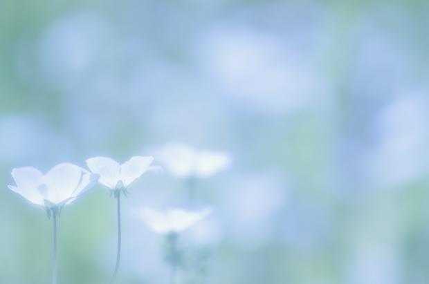 小さなお花が綺麗ですね