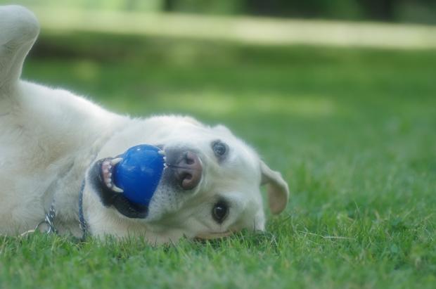 ボール楽しちー♪