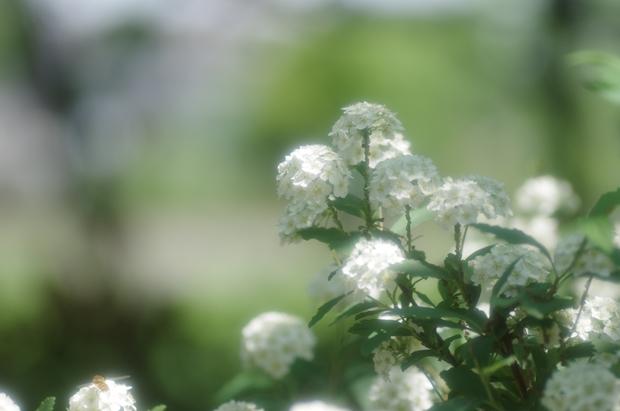 何の花だ?