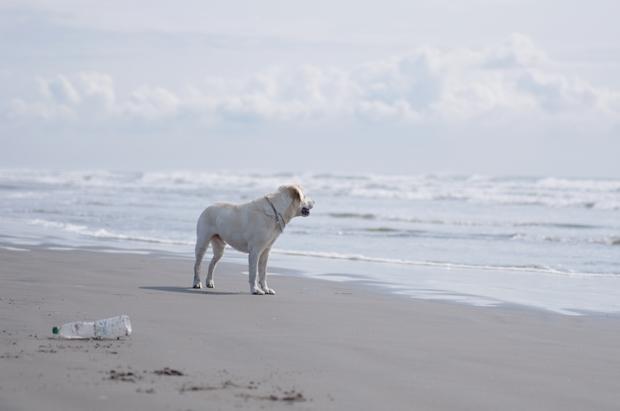 海は楽しーねー♪