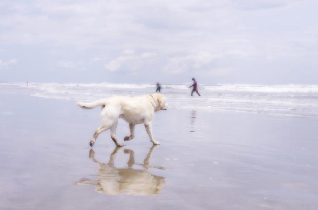 犬走るぅ♪