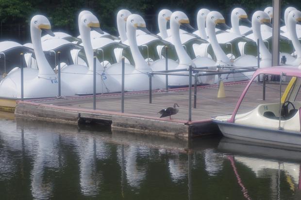ボートも静かに並んでいるよ。