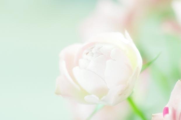 これもスカイツリー薔薇ね