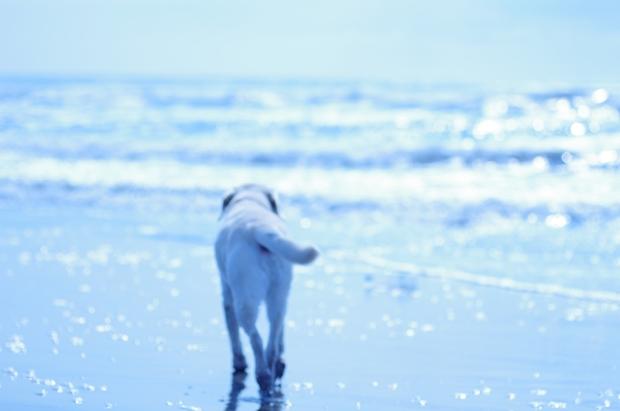 海に行ってきみを走らせたいね♪