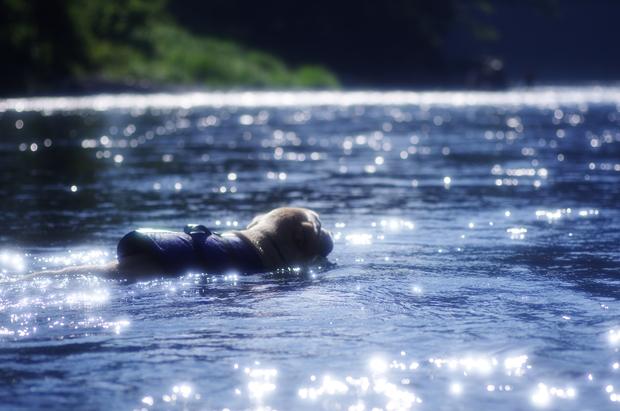 すごく川が光で綺麗だった。