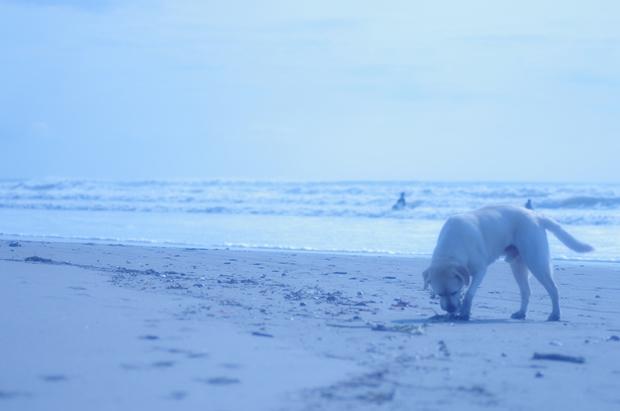何枚出してもまだある海のお写真