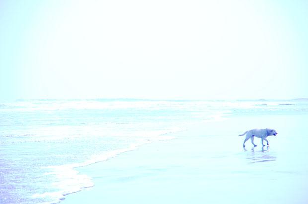 海に行きたいね。パズー♪