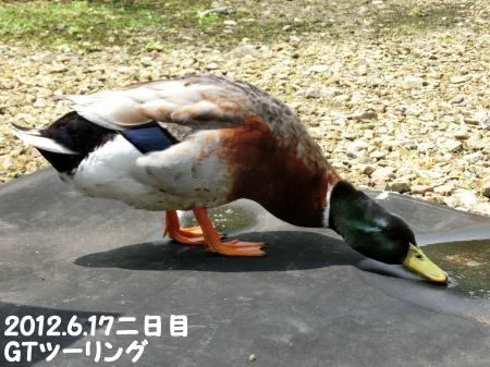 120620-2_convert_20120620223624.jpg