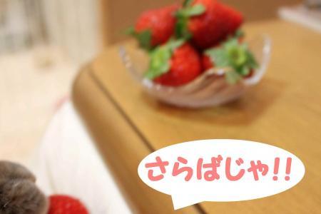 121205-4_convert_20121206010850.jpg